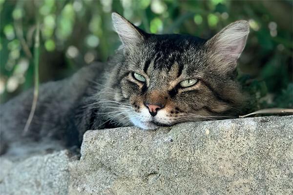 How to find a missing cat v2-JBS