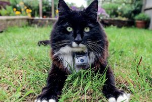 Colin Butcher's work with the BBC - The secret life of the cat